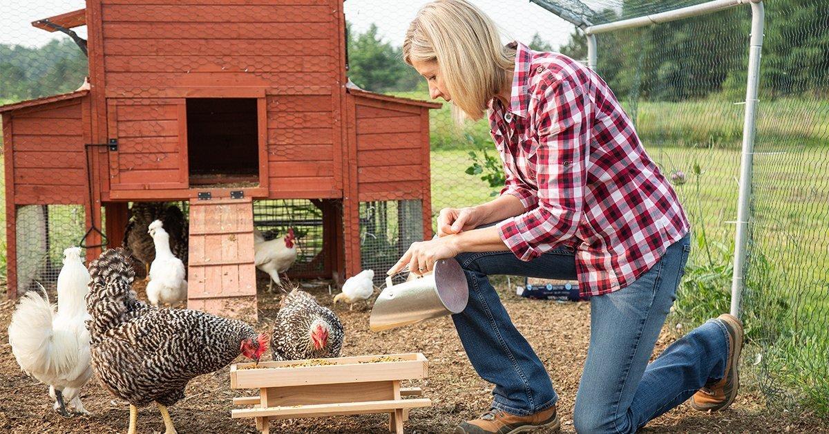 a women feeding her backyard chickens